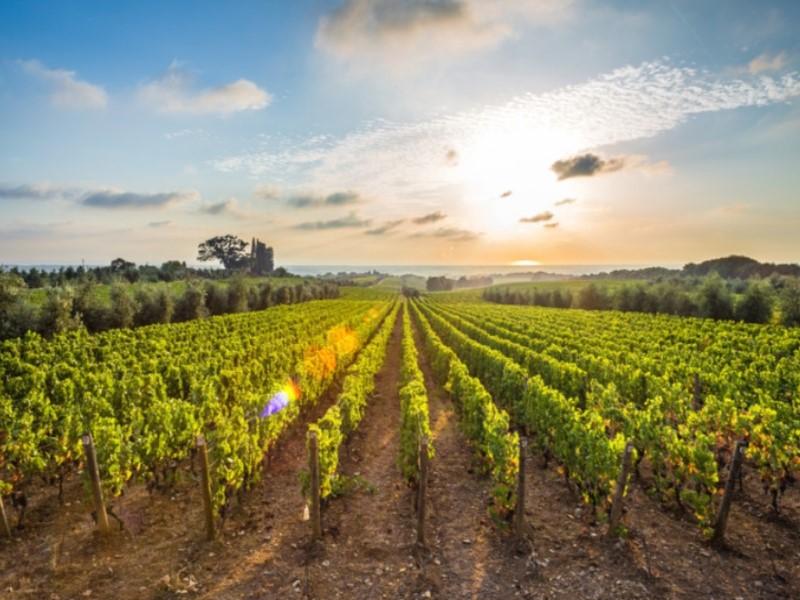 Αμπελοκαλλιέργιες - Παραγωγή οίνου & τσίπουρου