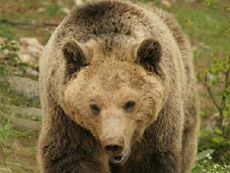 Καταφύγια άγριας ζωής - Οικολογία